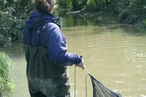 Inventaires ichtyologique sur la rivière des Fèves, secteur Sainte-Martine