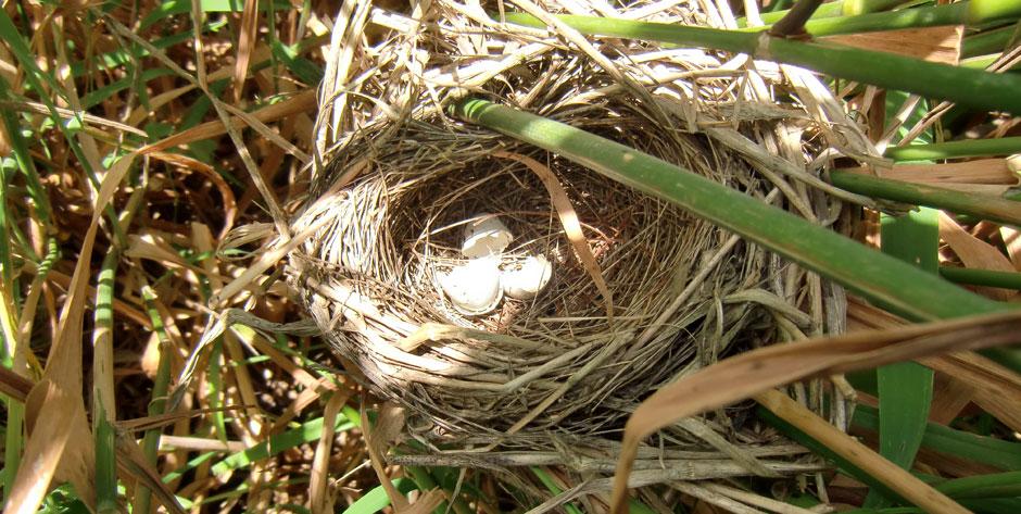 Projet de protection de la biodiversité aviaire