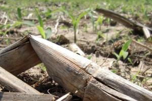 Technique de conservation des sols : semis direct