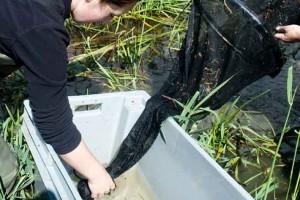 Caractérisation de l'habitat du poisson
