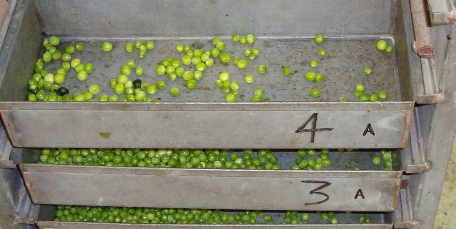 Développement  et gestion de projets en fertilisation