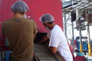 Implantation de programme de salubrité à la ferme (CanadaGAP)